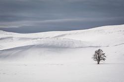 Miller Pamela- Solitude in Yellowstone