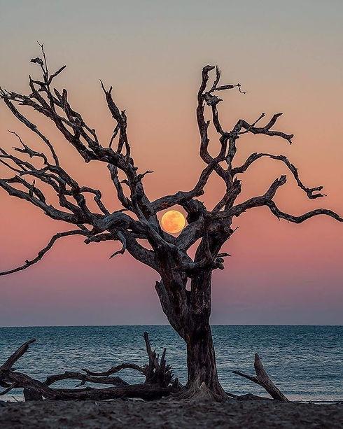 albero luna.jpg
