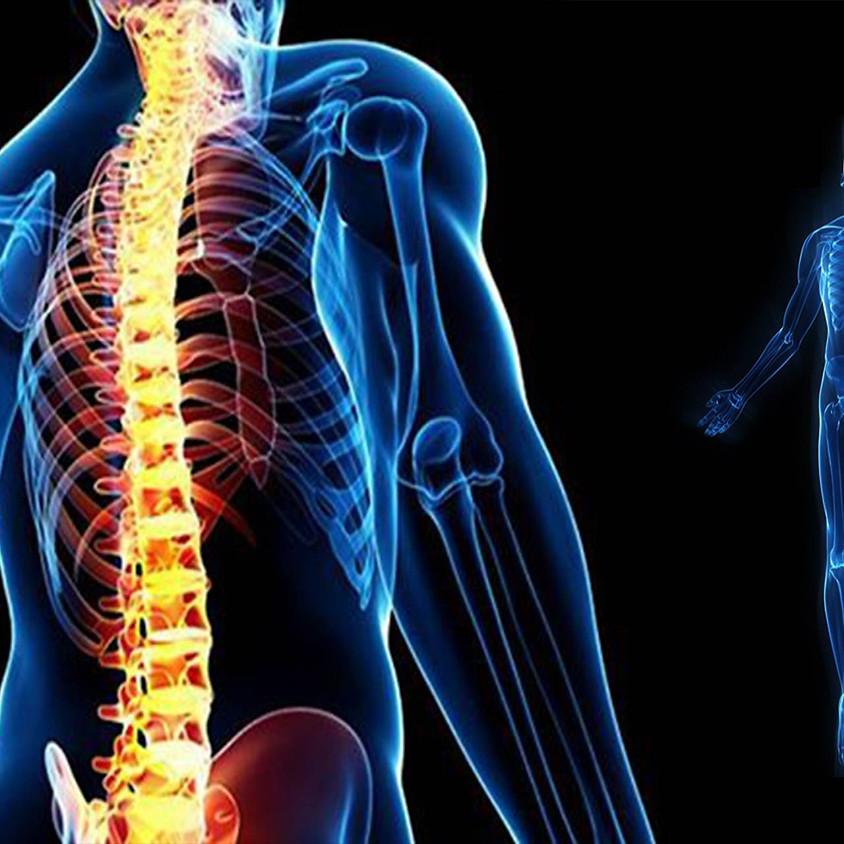 Allineamento divino della colonna vertebrale