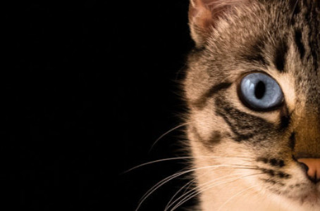 Come nasce e perchè si chiama Club del Gatto ... ?