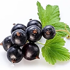 blackcurrant.webp