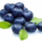 blueberry.webp