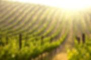 Wine Image 033.jpg