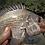 Thumbnail: Gobblers Lures Shrimps