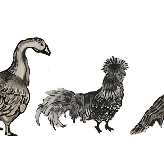 Bird March