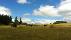 Geldings field