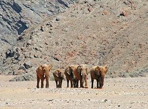 Hoanib Desert Elephant.jpg