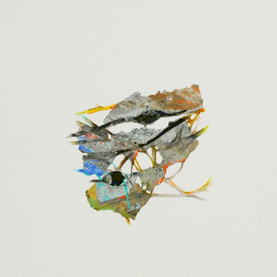 lichen 3.jpg