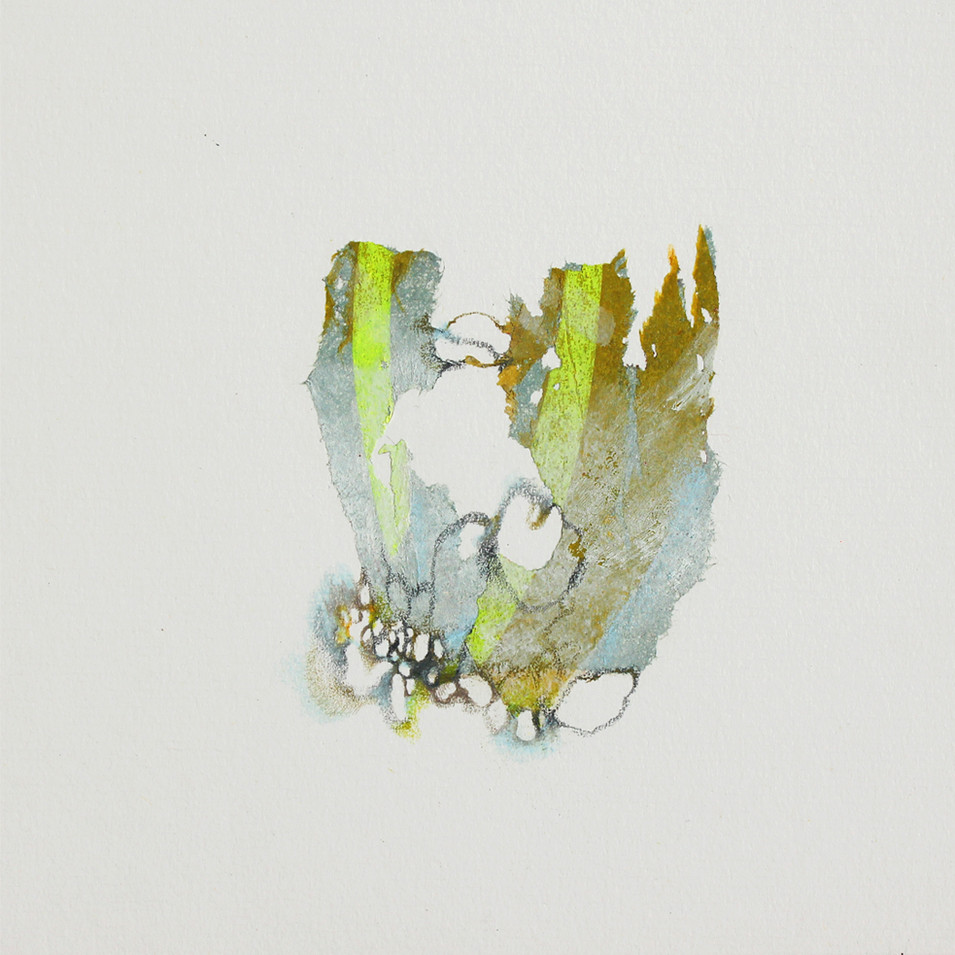 lichen 8.jpg