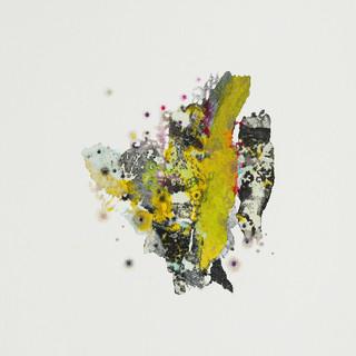 lichen 4.jpg
