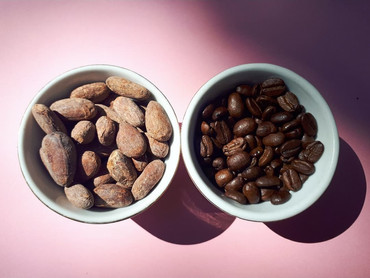The difference between coffee (caffeine) and cacao (theobromine)