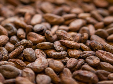 Wild Child favorite: cacao from the Dominican Republic