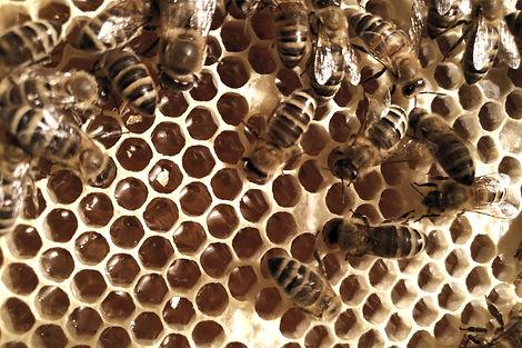 Bees Gold Honey