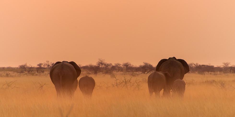 Fotoreise: Kilimanjaro mit Mount Meru und Safari mit Dirk Steuerwald