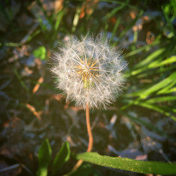 Soft Wishing Weed