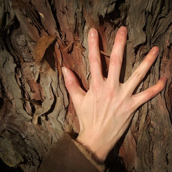 Cedar and Bone