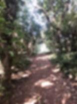 Walton Common Woodland.jpg