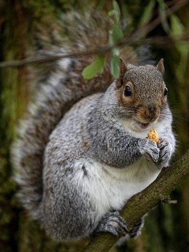 Squirrel - 3.jpg