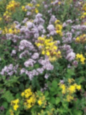Walton Common Flowers - 3.jpg