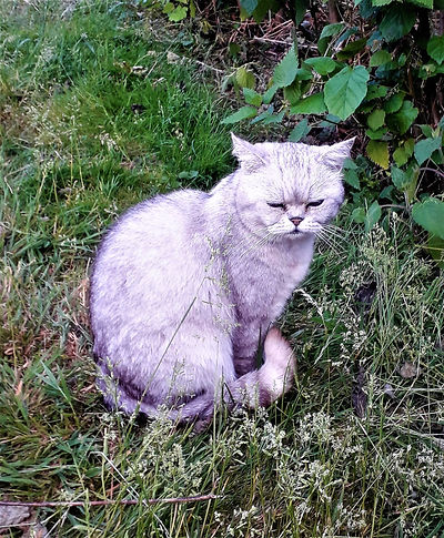 Milo The Ghost Cat.jpg
