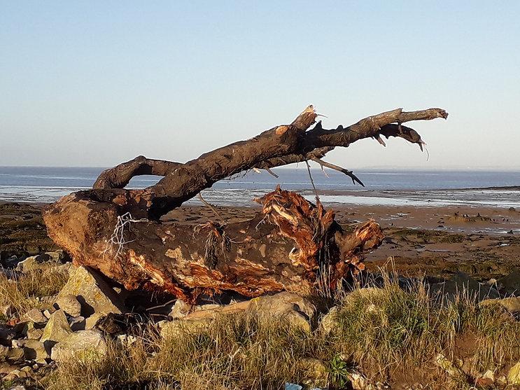 Clevedon Driftwood - 1.jpg