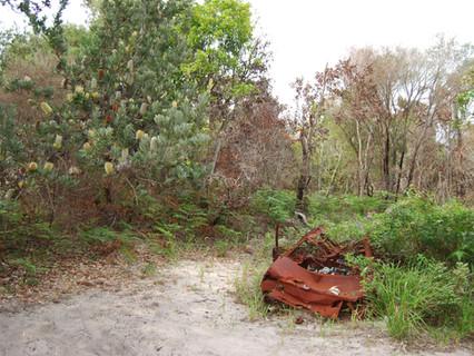 De la modernidad de la naturaleza a la posmodernidad ambiental