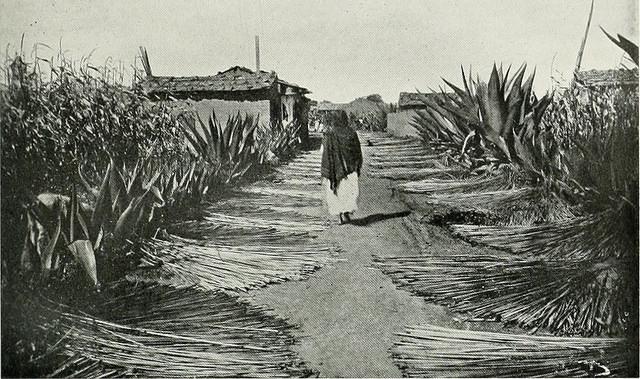 Enfoques de la cultura, derechos humanos, género y perspectivas de la antropología mexicana