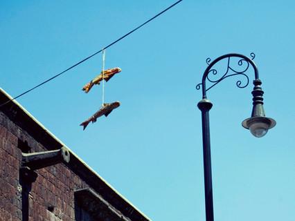 Peces en el aire