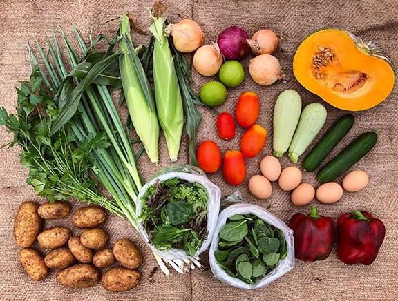 Veggie box_ potatoes, parsley, shallots,