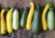 Organic produce Zucchini from Piccolo Farm Sydney