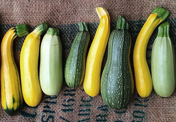 Organic produce Zucchini from Piccolo Farm Sydney