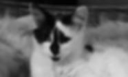 Screen Shot 2019-05-28 at 00.47.54.png