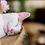 Thumbnail: Feline Experience Gift Voucher for 2