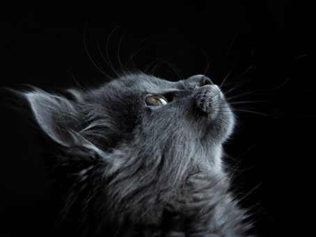 A Feline Mystery: Why Cats Are So Deeply Associated With Spirituality