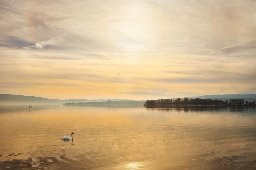 swan-1537706_1920.jpg