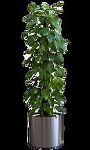 kisspng-flowerpot-houseplants-5b3db86b04