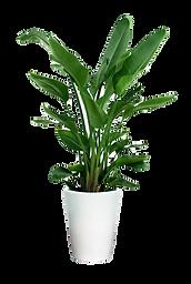 149-1499551_transparent-potted-plants-pn