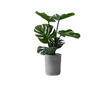 pngtree-potted-plants-image_1153974_edit