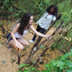 Puerto Rico tree survey