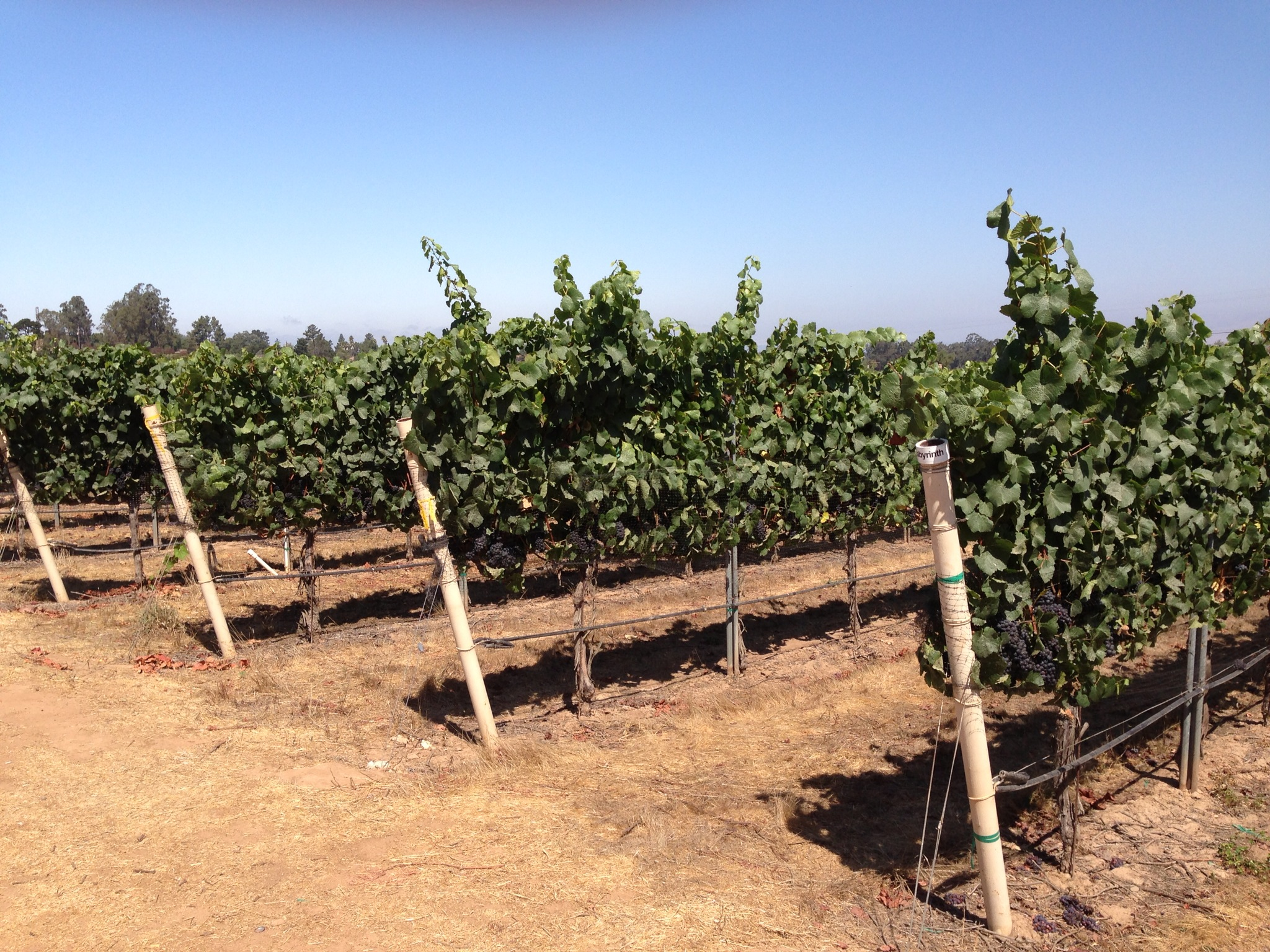 Biodynamic & SIP Certified Vineyards