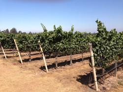 Biodynamic & SIP Certified Vineyards
