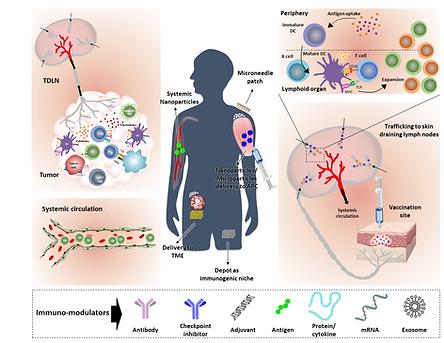 Immunoengineering figure shiran .png