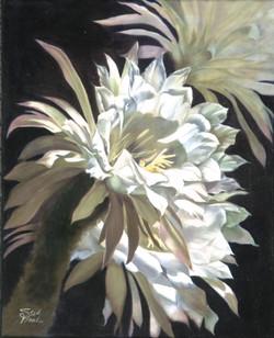 Desert Flower 1