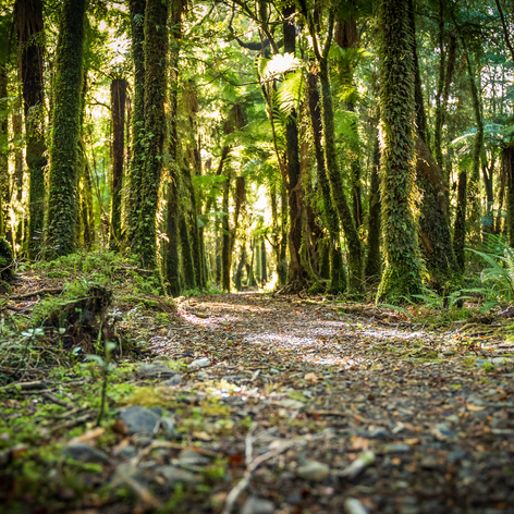 A magical Paparoa Track