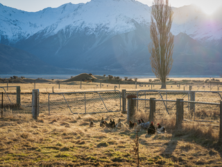 Mt Cook Stn-200717-96.png