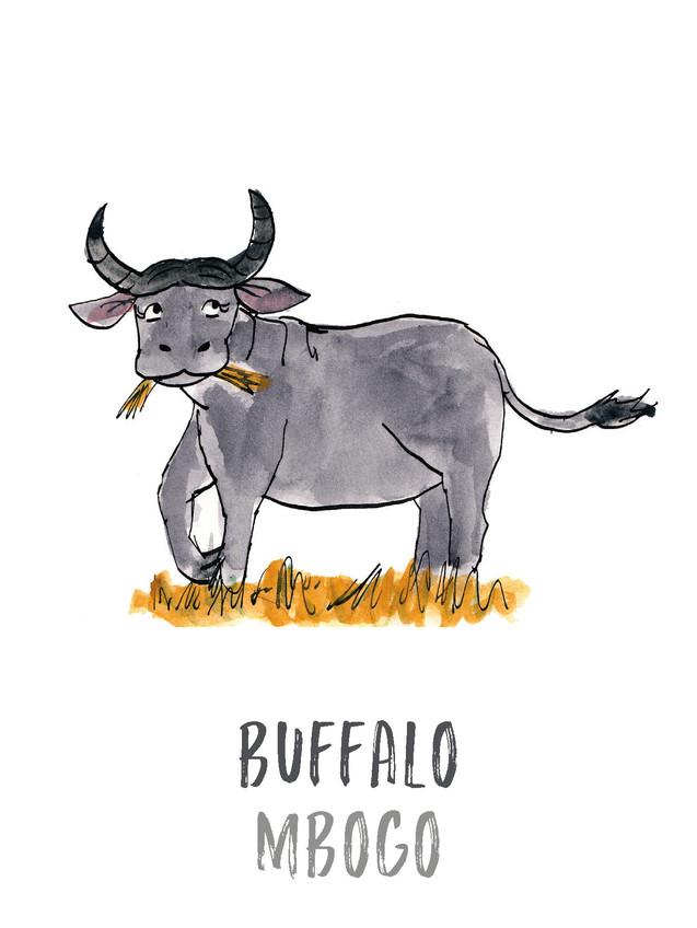 Buffalo / Mbogo