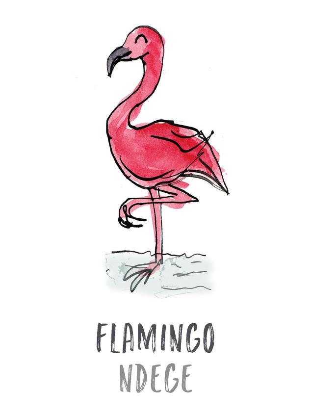 Flamingo / Ndege