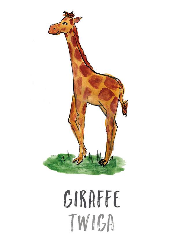 Giraffe / Twiga