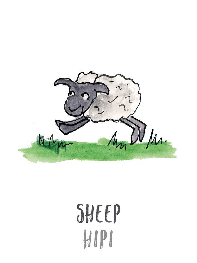 Sheep / Hipi