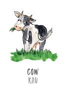 Cow / Kau
